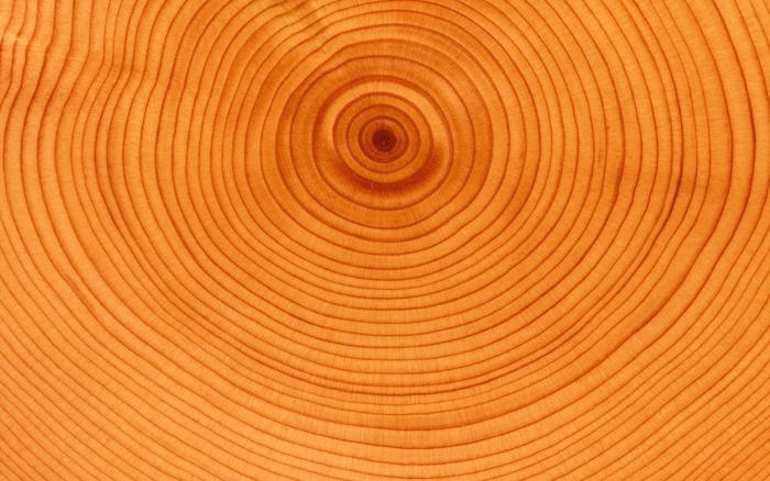 Si tenemos un árbol con anillos oscuros muy anchos, reflejarán un invierno largo y severo; del mismo modo que los anillos claros, según su mayor o menor anchura, reflejan veranos más o menos largos.