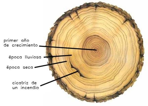 La vida de un árbol | imagen: cmmedia.es